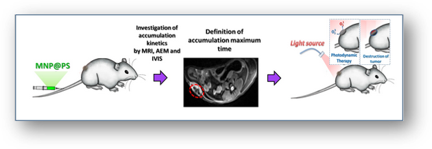 MRI确定光动力疗法的最佳治疗时间:临床前研究
